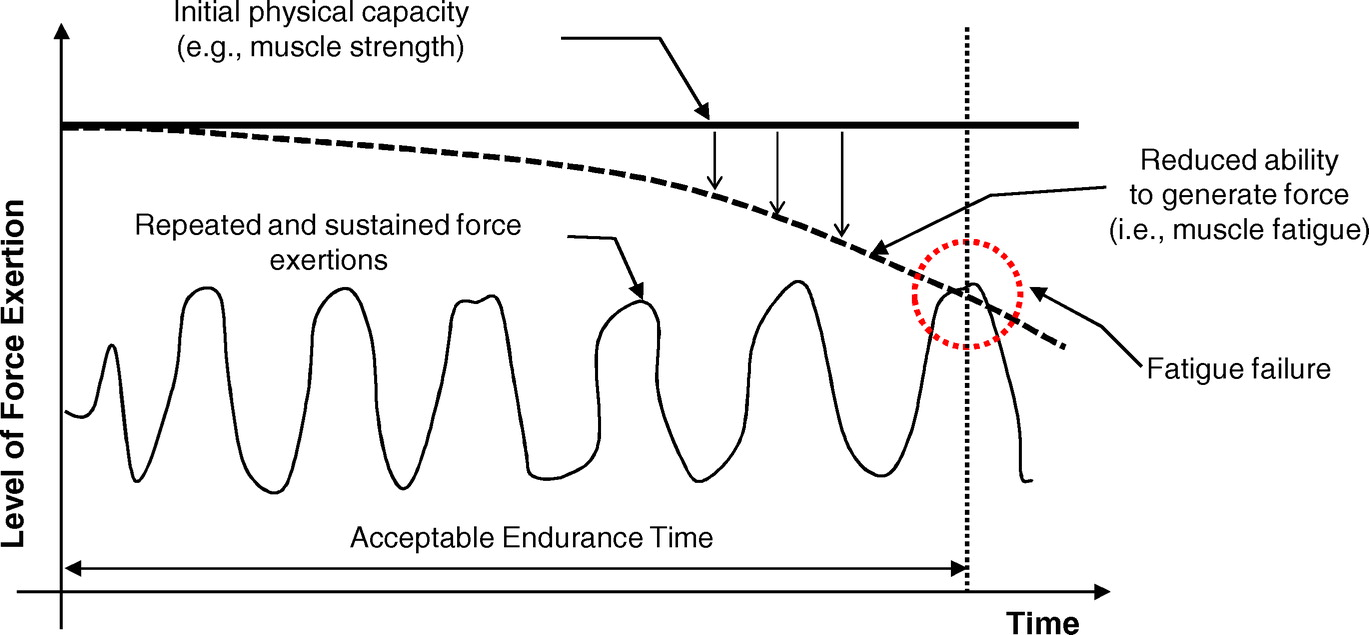 Simulation Based Assessment Of Workers Muscle Fatigue And Its Impact On Construction Operations Journal Of Construction Engineering And Management Vol 142 No 11