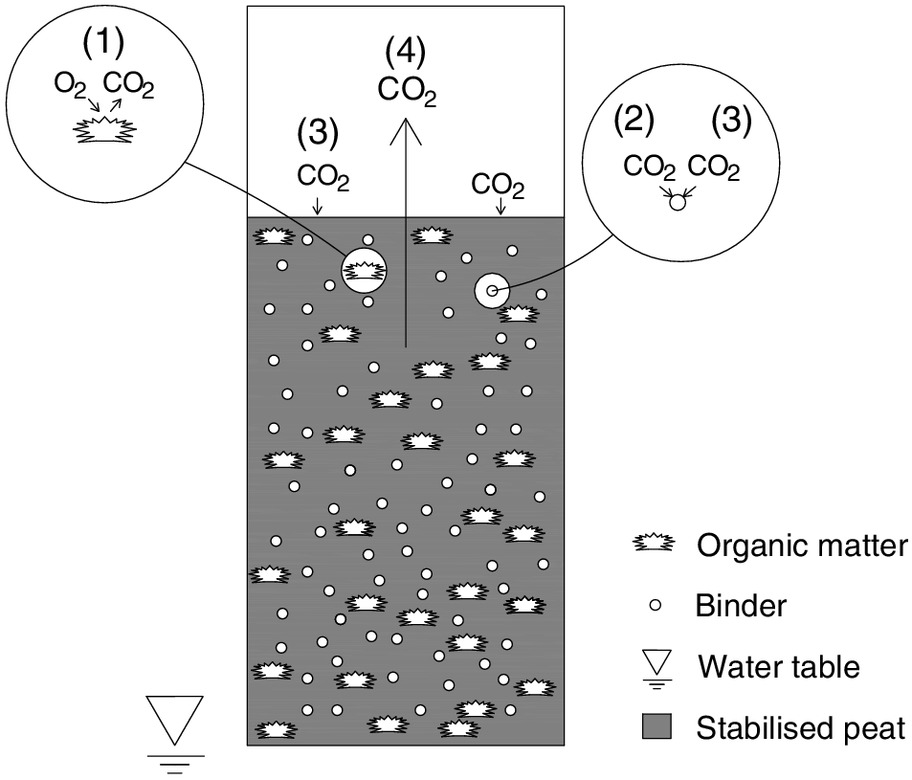 Evidence of Stabilized Peat as a Net Carbon Sink | Journal of