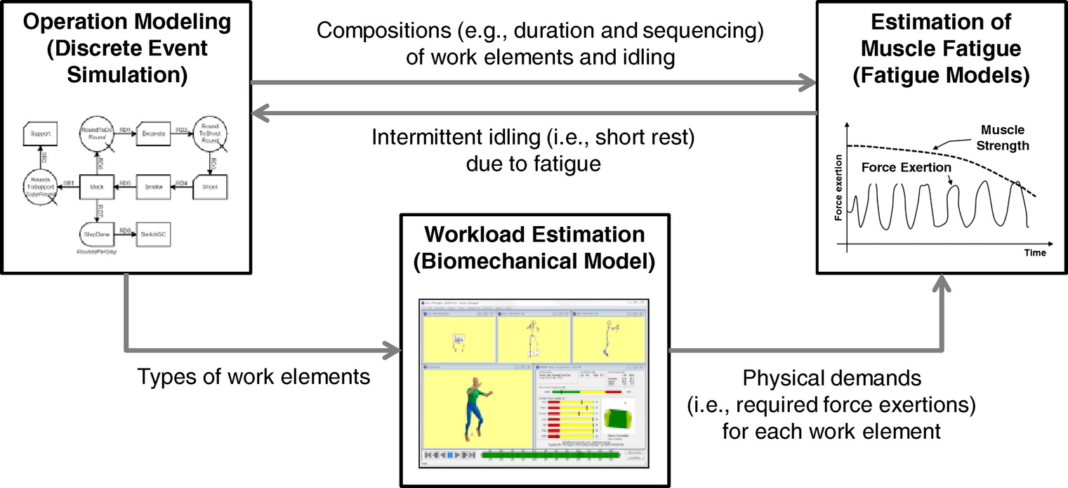 Simulation-Based Assessment of Workers' Muscle Fatigue and