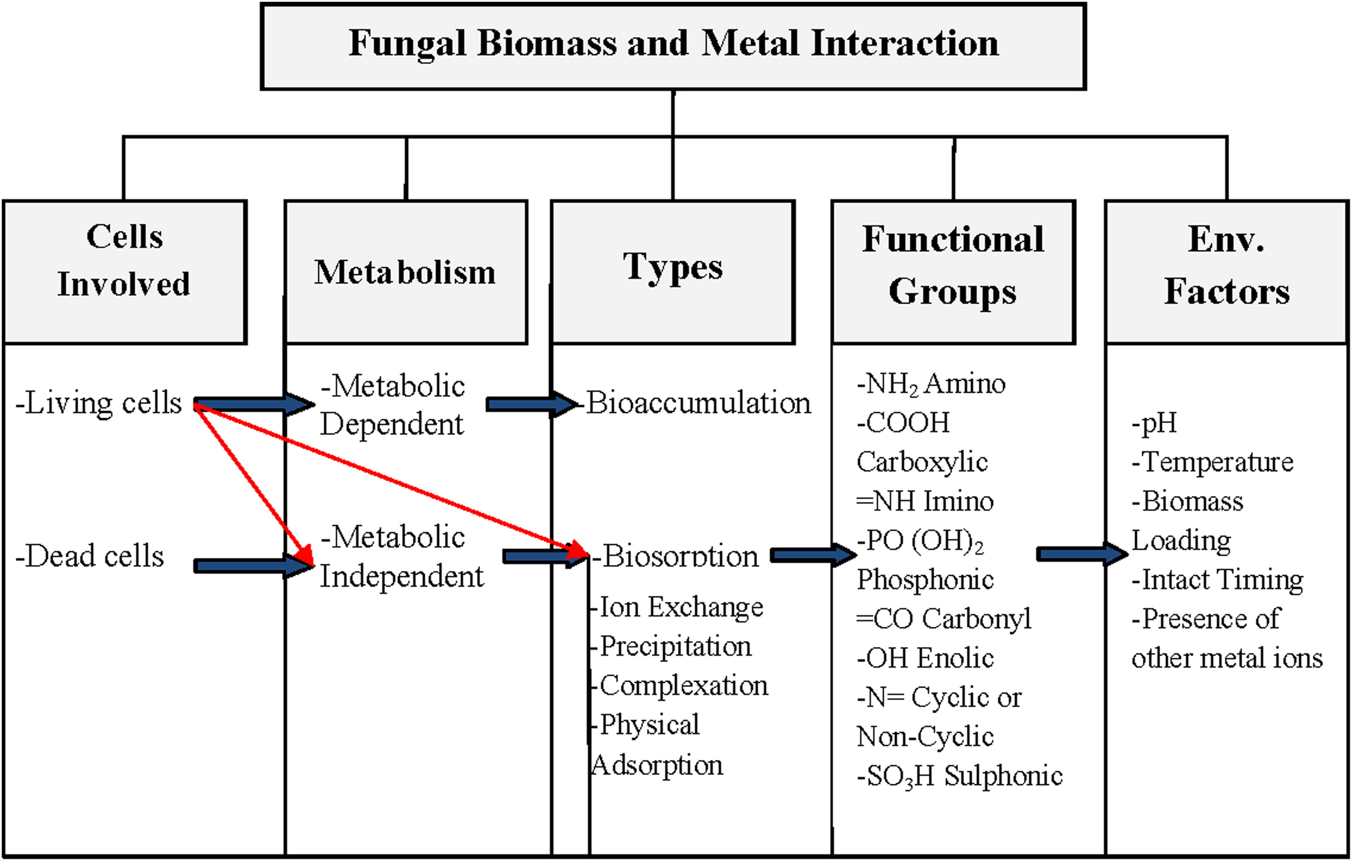 Heavy Metal Removal from Industrial Wastewater Using Fungi